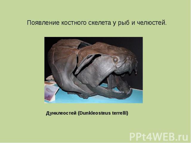 Появление костного скелета у рыб и челюстей. Дунклеостей (Dunkleosteus terrelli)