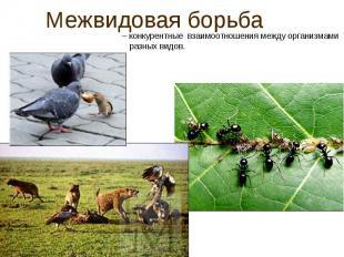 Межвидовая борьба– конкурентные взаимоотношения между организмами разных видов.