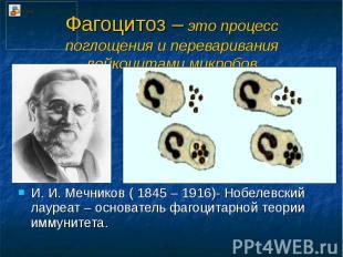 Фагоцитоз – это процесс поглощения и переваривания лейкоцитами микробов И. И. Ме