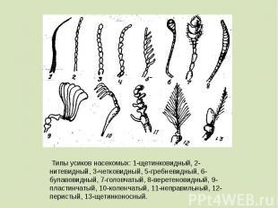 Типы усиков насекомых: 1-щетинковидный, 2-нитевидный, 3-четковидный, 5-гребневид