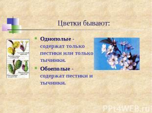 Цветки бывают:Однополые - содержат только пестики или только тычинки.Обоеполые -