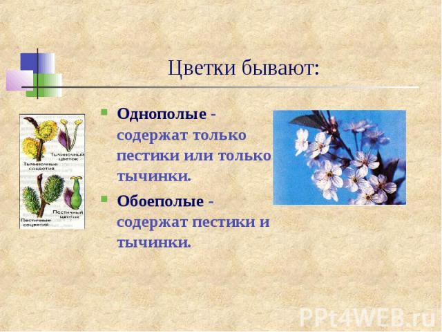 Цветки бывают:Однополые - содержат только пестики или только тычинки.Обоеполые - содержат пестики и тычинки.