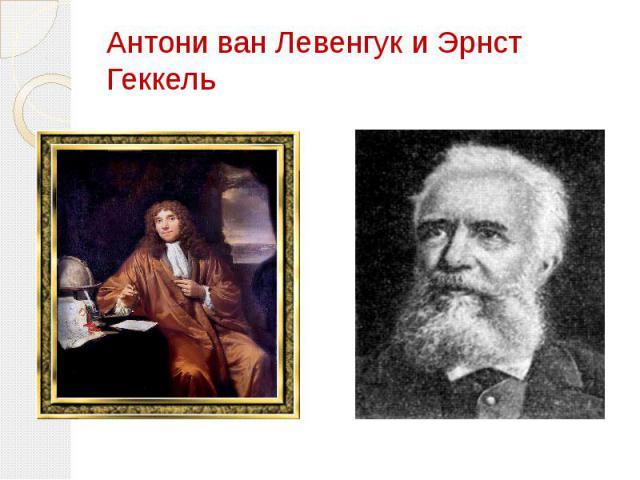Антони ван Левенгук и Эрнст Геккель