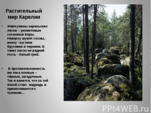 Растительный мир Карелии Жемчужины карельских лесов – реликтовые сосновые боры.