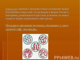 Риккетсии занимают промежуточное положение между бактериями и вирусами. По разме