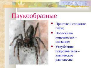 ПаукообразныеПростые и сложные глаза;Волоски на конечностях – осязание;Углублени