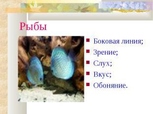 РыбыБоковая линия;Зрение;Слух;Вкус;Обоняние.