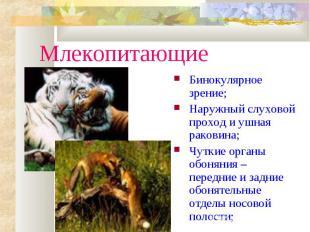 МлекопитающиеБинокулярное зрение;Наружный слуховой проход и ушная раковина;Чутки