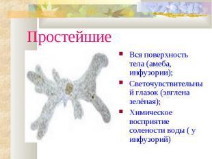 ПростейшиеВся поверхность тела (амеба, инфузории);Светочувствительный глазок (эв