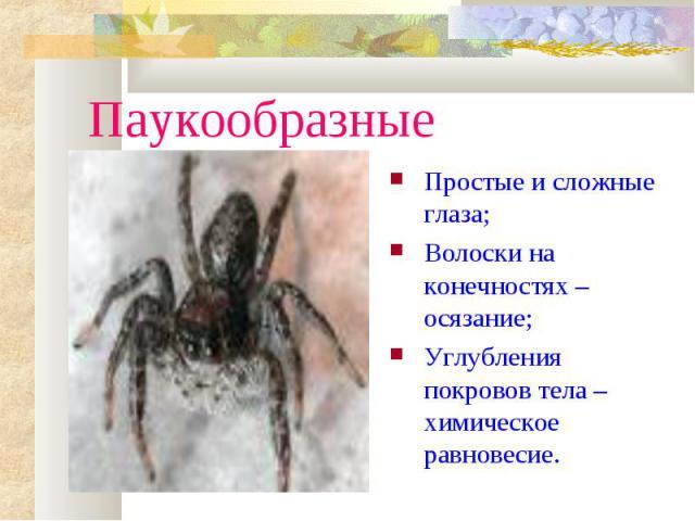 ПаукообразныеПростые и сложные глаза;Волоски на конечностях – осязание;Углубления покровов тела – химическое равновесие.