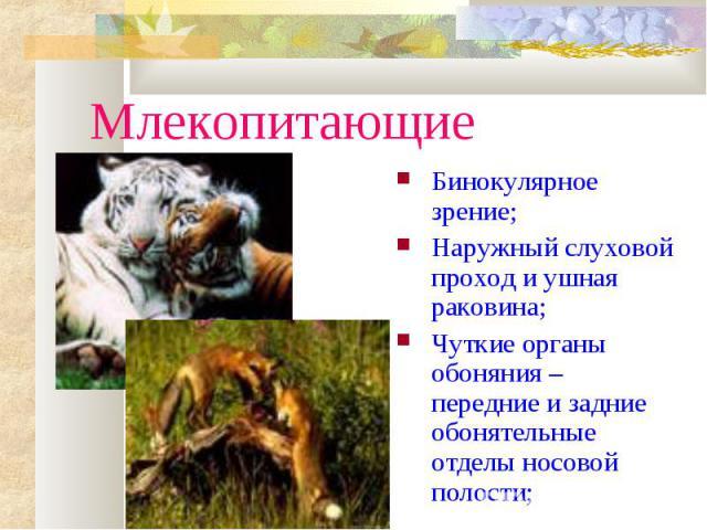 МлекопитающиеБинокулярное зрение;Наружный слуховой проход и ушная раковина;Чуткие органы обоняния – передние и задние обонятельные отделы носовой полости;