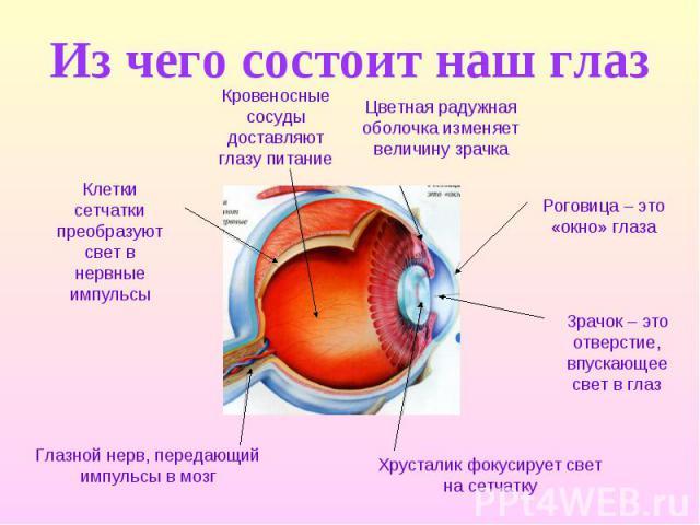 Из чего состоит наш глаз Кровеносные сосуды доставляют глазу питание Клетки сетчатки преобразуют свет в нервные импульсы Глазной нерв, передающий импульсы в мозг Хрусталик фокусирует свет на сетчатку Зрачок – это отверстие, впускающее свет в глаз Ро…