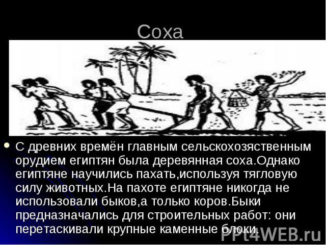 Соха С древних времён главным сельскохозяственным орудием египтян была деревянная соха.Однако египтяне научились пахать,используя тягловую силу животных.На пахоте египтяне никогда не использовали быков,а только коров.Быки предназначались для строите…