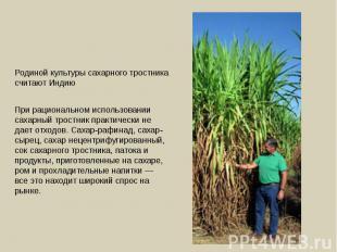 Родиной культуры сахарного тростника считают Индию При рациональном использовани