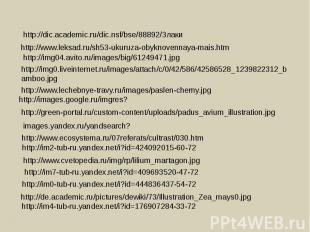 http://dic.academic.ru/dic.nsf/bse/88892/Злаки http://www.leksad.ru/sh53-ukuruza
