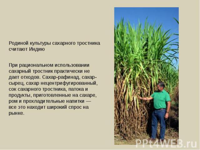 Родиной культуры сахарного тростника считают Индию При рациональном использовании сахарный тростник практически не дает отходов. Сахар-рафинад, сахар-сырец, сахар нецентрифугированный, сок сахарного тростника, патока и продукты, приготовленные на са…