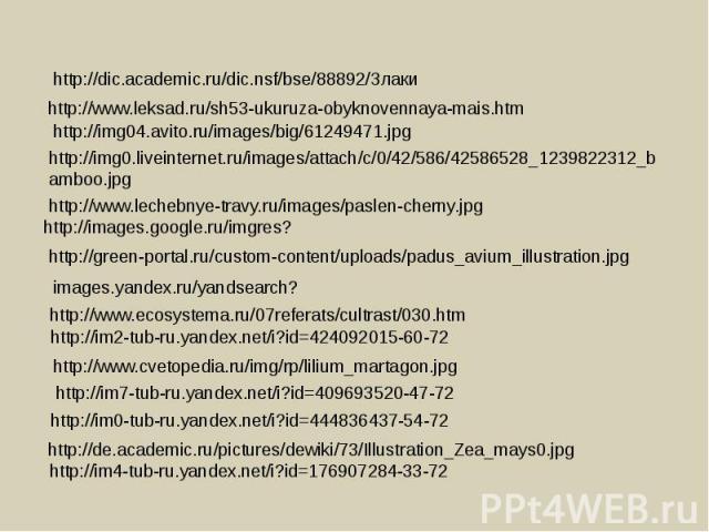 http://dic.academic.ru/dic.nsf/bse/88892/Злаки http://www.leksad.ru/sh53-ukuruza-obyknovennaya-mais.htm http://img0.liveinternet.ru/images/attach/c/0/42/586/42586528_1239822312_bamboo.jpg http://images.google.ru/imgres? http://green-portal.ru/custom…