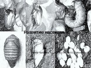 Развитие насекомых Автор: Архипова Т.С. ГБОУ СОШ №113. г.Москва