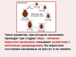 Такое развитие, при котором насекомое проходит три стадии: яйцо - личинка - взро