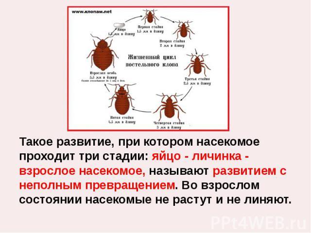 Такое развитие, при котором насекомое проходит три стадии: яйцо - личинка - взрослое насекомое, называют развитием с неполным превращением. Во взрослом состоянии насекомые не растут и не линяют.