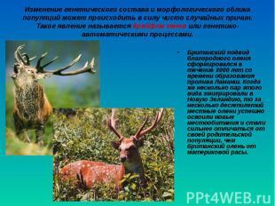 Британский подвид благородного оленя сформировался в течение 8000 лет со времени
