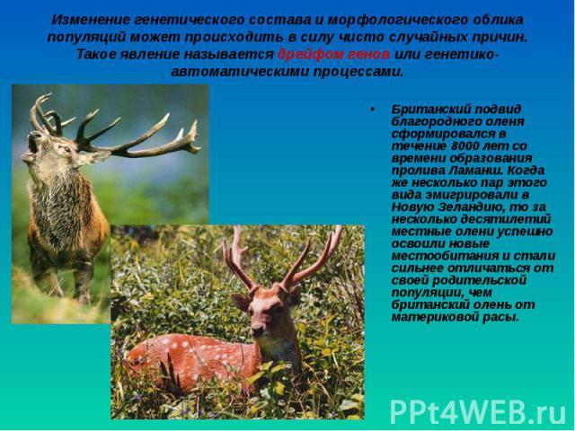 Британский подвид благородного оленя сформировался в течение 8000 лет со времени образования пролива Ламанш. Когда же несколько пар этого вида эмигрировали в Новую Зеландию, то за несколько десятилетий местные олени успешно освоили новые местообитан…