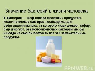 1. Бактерии — шеф-повара молочных продуктов. Молочнокислые бактерии необходимы д