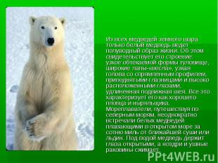 Из всех медведей земного шара только белый медведь ведет полуводный образ жизни.