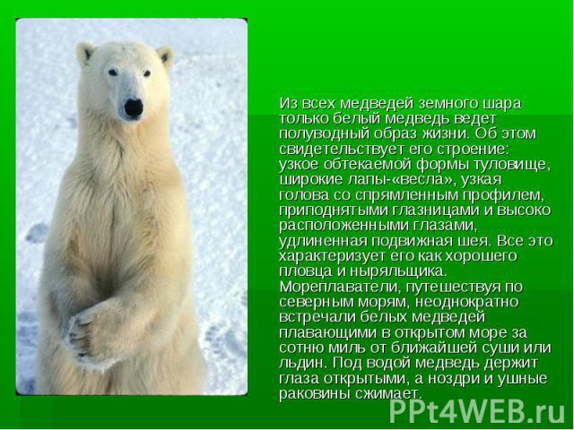 Из всех медведей земного шара только белый медведь ведет полуводный образ жизни. Об этом свидетельствует его строение: узкое обтекаемой формы туловище, широкие лапы-«весла», узкая голова со спрямленным профилем, приподнятыми глазницами и высоко расп…