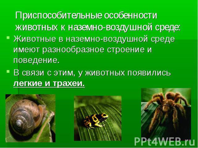 Приспособительные особенности животных к наземно-воздушной среде: Животные в наземно-воздушной среде имеют разнообразное строение и поведение.В связи с этим, у животных появились легкие и трахеи.