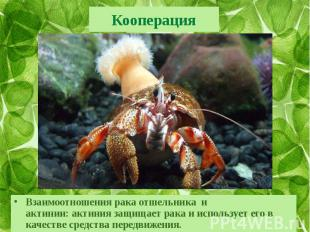 КооперацияВзаимоотношениярака отшельника и актинии:актиния&nbs