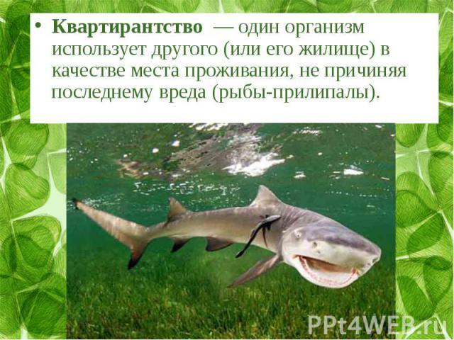 Квартирантство— один организм использует другого (или его жилище) в качестве места проживания, не причиняя последнему вреда (рыбы-прилипалы).
