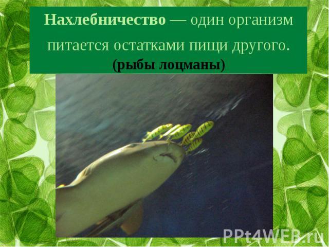 Нахлебничество— один организм питается остатками пищи другого. (рыбы лоцманы)