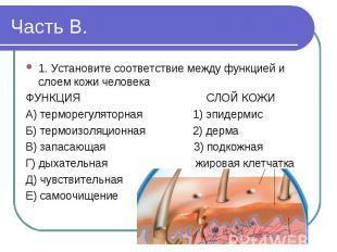 1. Установите соответствие между функцией и слоем кожи человека ФУНКЦИЯ СЛОЙ КОЖ