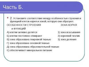 2. Установите соответствие между особенностью строения и функцией клеток корня и