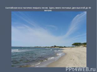 Балтийская коса частично покрыта лесом. Здесь много песчаных дюн высотой до 40 м