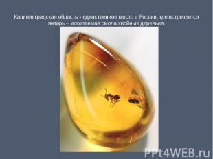 Калининградская область - единственное место в России, где встречается янтарь –