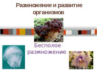 Размножение и развитие организмов. Бесполое размножение