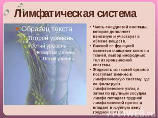 Лимфатическая система Часть сосудистой системы, которая дополняет венозную и уча