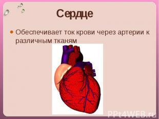 Сердце Обеспечивает ток крови через артерии к различным тканям