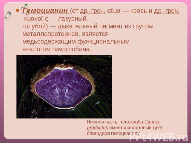 Гемоцианин(отдр.-греч.αἷμα— кровь идр.-греч.κυανoῦς— лазурный, голубой)—дыхательныйпигментиз группыметаллопротеинов, является медьсодержащимфункциональным аналогомгемоглобина. Нижняя часть телакрабаCancer productusимеет фиолетовый ц…
