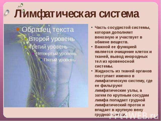 Лимфатическая система Часть сосудистой системы, которая дополняет венозную и участвует в обмене веществ. Важной ее функцией является очищение клеток и тканей, вывод инородных тел из кровеносной системы. Жидкость из тканей органов поступает именно в …