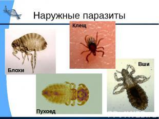 Наружные паразиты
