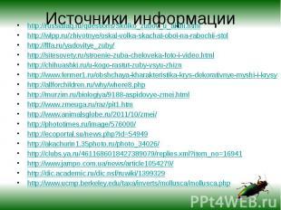 Источники информации http://russiafaq.ru/questions/Skolko_zubov_u_akuli.htmlhttp