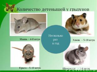 Количество детенышей у грызунов Мышь – 4-8 штук Хомяк – 5-18 штук Крыса – 5-10 ш