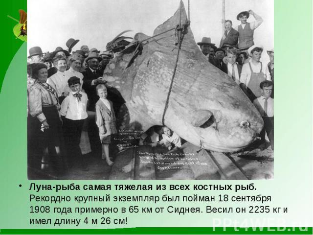 Луна-рыба самая тяжелая из всех костных рыб.Рекордно крупный экземпляр был пойман 18 сентября 1908 года примерно в 65 км от Сиднея. Весил он 2235 кг и имел длину 4 м 26 см!