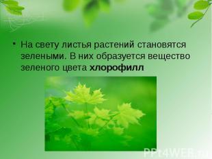 На свету листья растений становятся зелеными. В них образуется вещество зеленого
