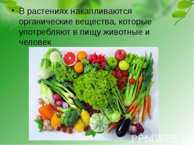 В растениях накапливаются органические вещества, которые употребляют в пищу животные и человек