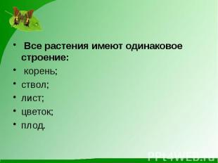 Все растения имеют одинаковое строение: корень;ствол;лист;цветок;плод.