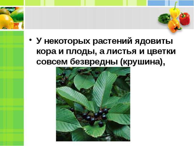 У некоторых растений ядовиты кора и плоды, а листья и цветки совсем безвредны (крушина),